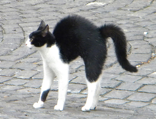 Comunicarea nonverbala -Postura pisica